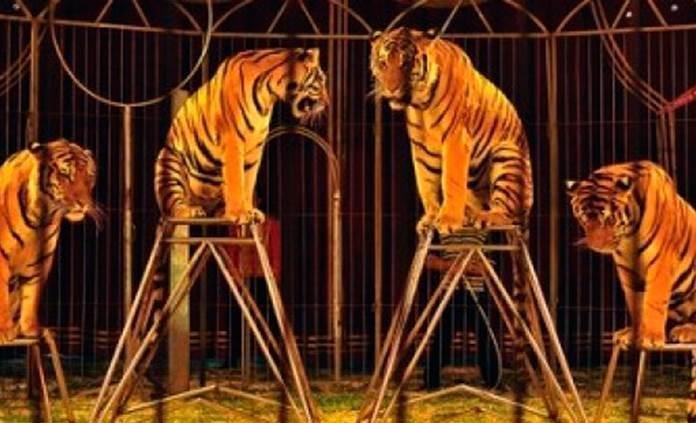 Plantean regreso de animales a circos