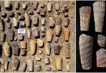 Descubren fósil marino de 465 millones de años