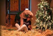 Elefanta albina herida por trampa se rehabilita