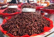 Granjas de insectos comestibles, negocio alimenticio prometedor