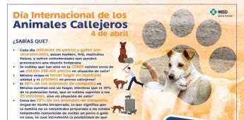 Conmemoran este sábado el Día Internacional de los Animales Callejeros