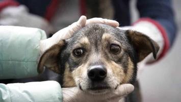 Aprueban nueva Ley de Protección a los Animales para el Estado
