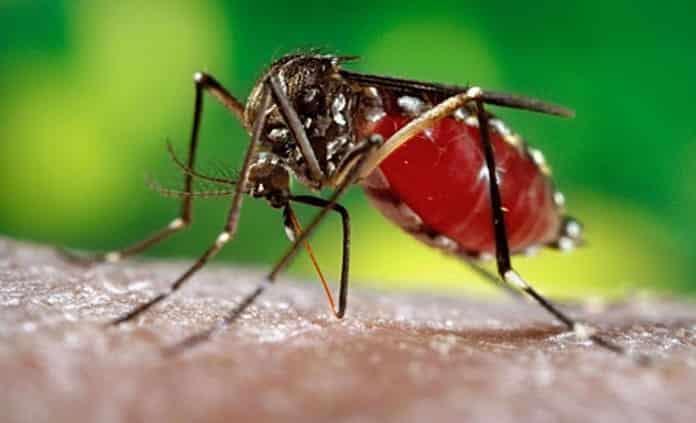 Suma SLP 124 casos confirmados de dengue