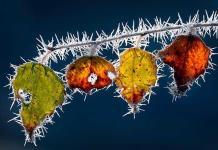 Revelan el origen de las diferentes formas de los cristales de hielo