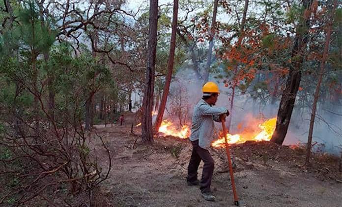 Suman 59 incendios forestales en SLP
