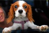 Por qué nunca debes dejar a tu perro dentro del auto