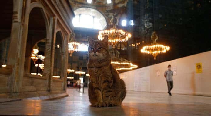 La Unesco, preocupada por la conversión de Santa Sofía en mezquita'>