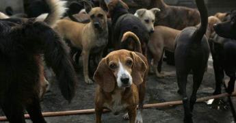 Aprueba Congreso mayor vigilancia a los albergues para refugio y adopción de animales