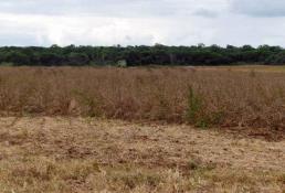 Escasean lluvias y colapsan cultivos