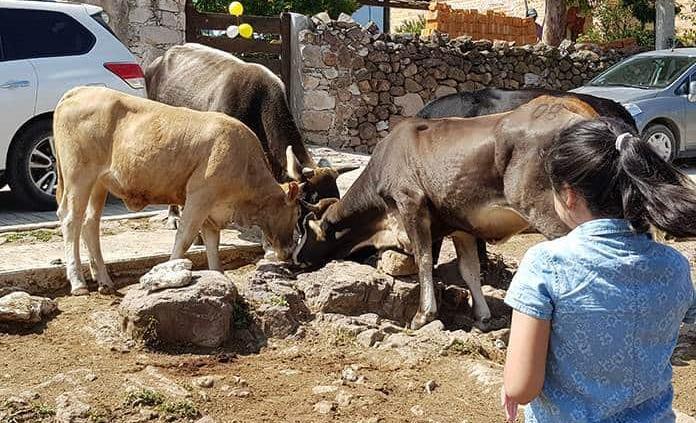 Estados Unidos cierra puertas al ganado del Altiplano