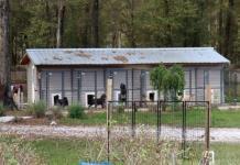 Arrestan en Florida a latino que tenía once cachorros muertos en la basura