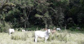 Lluvia beneficia a los ganaderos