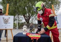 Cruz Roja despide con honores a Athos y Tango, los perros rescatistas envenenados en Querétaro