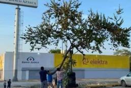 Sanciona Ecología a la empresa que cortó árbol